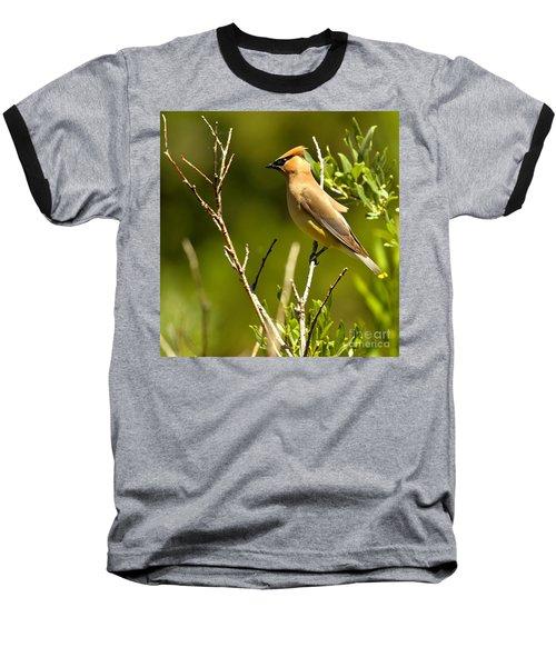 Perfectly Perched Baseball T-Shirt