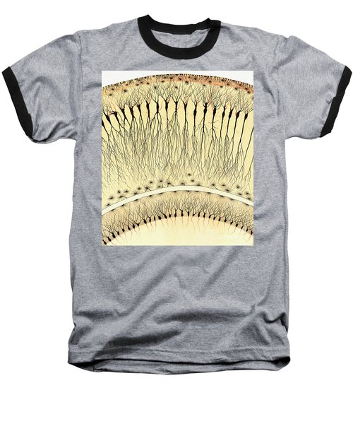 Pes Hipocampi Major Santiago Ramon Y Cajal Baseball T-Shirt