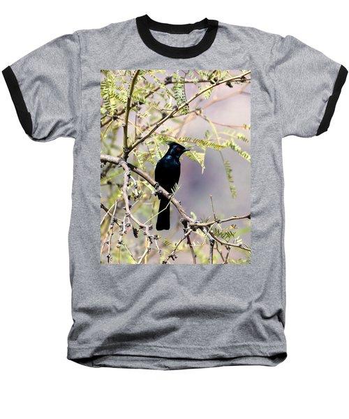Phainopepla Black Cardinal Baseball T-Shirt