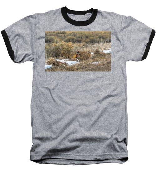 Pheasant Glory Baseball T-Shirt by Yeates Photography