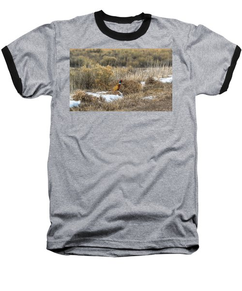 Pheasant Glory Baseball T-Shirt