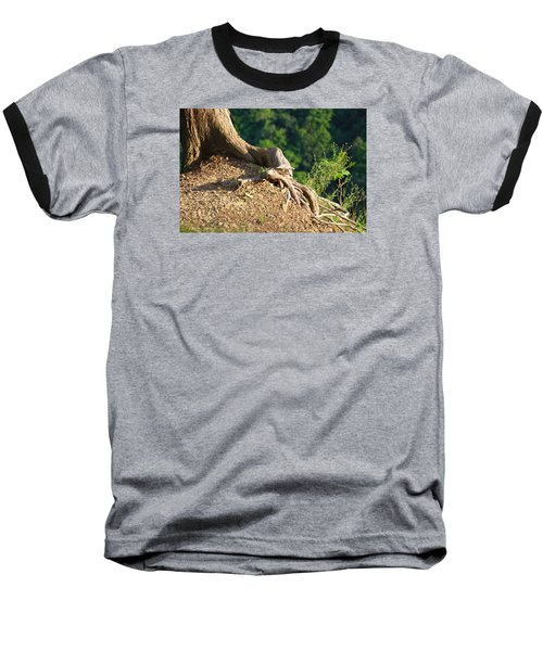 Picture Of A Tree On A Ledge Baseball T-Shirt