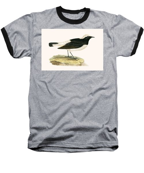 Pied Wheatear Baseball T-Shirt by English School