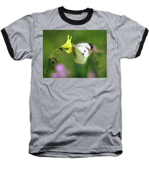 Pieris Rapae Baseball T-Shirt