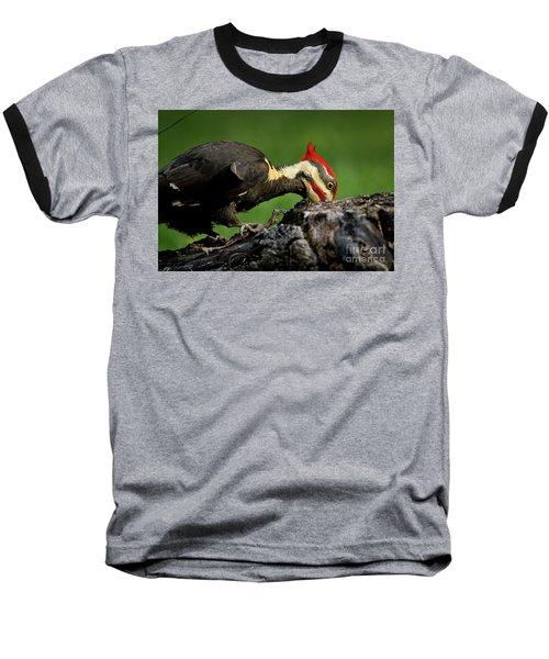 Pileated 3 Baseball T-Shirt by Douglas Stucky