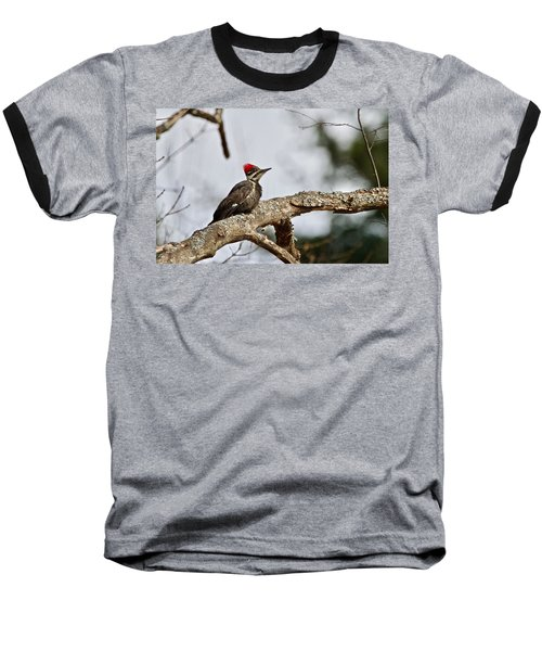 Baseball T-Shirt featuring the photograph pileated Woodpecker 1068  by Michael Peychich