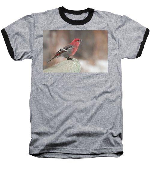 Pine Grosbeak Baseball T-Shirt