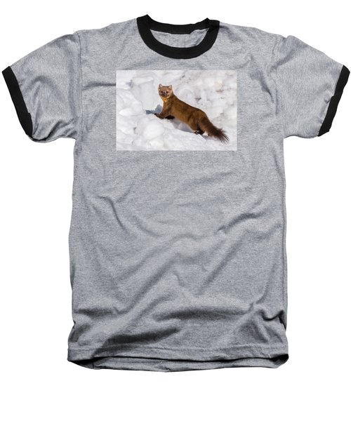 Pine Marten In Snow Baseball T-Shirt