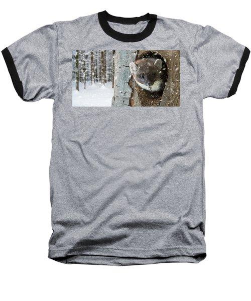 Pine Marten In Tree In Winter Baseball T-Shirt