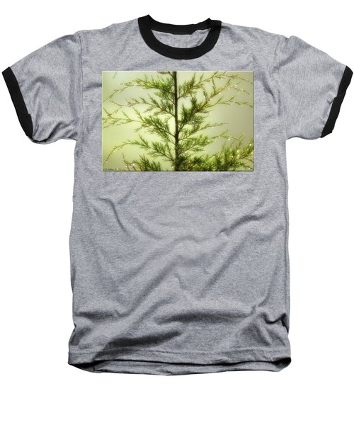 Baseball T-Shirt featuring the photograph Pine Shower by Brian Wallace