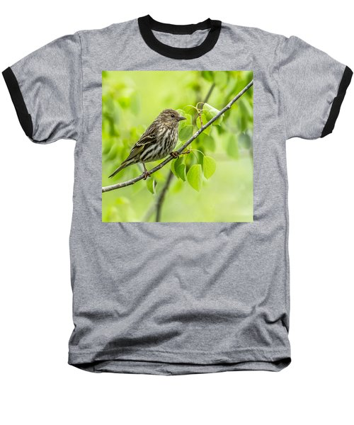Pine Siskin On A Branch Baseball T-Shirt by Yeates Photography