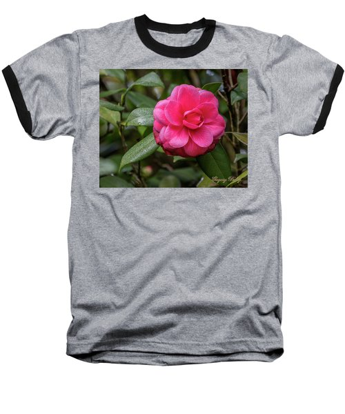 Pink Camelia 02 Baseball T-Shirt by Gregory Daley  PPSA