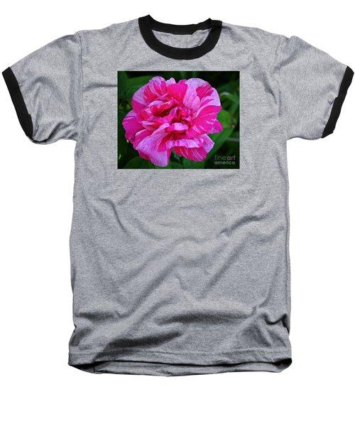 Pink Candy Stripe Rose Baseball T-Shirt