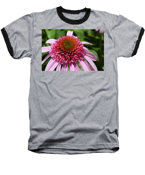 Pink Coneflower Close-up Baseball T-Shirt