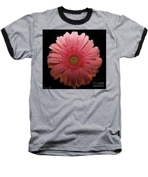 Pink Gerbera Daisy  Baseball T-Shirt