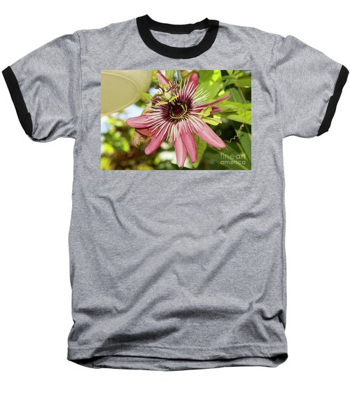 Pink Passiflora Baseball T-Shirt by Elvira Ladocki