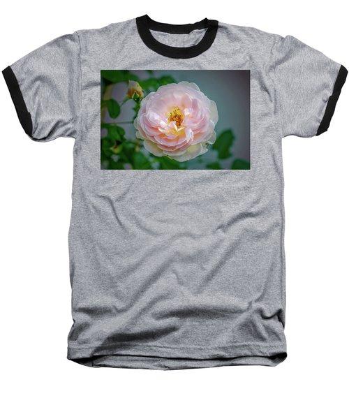 Pink Rose #c3 Baseball T-Shirt by Leif Sohlman