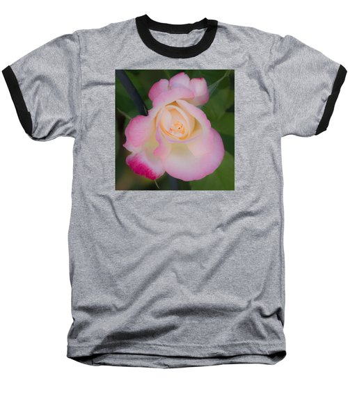 Pink Tinged Rose Baseball T-Shirt by Cathy Donohoue