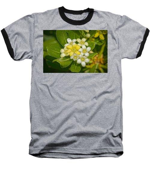 Pittosporum Flowers Baseball T-Shirt