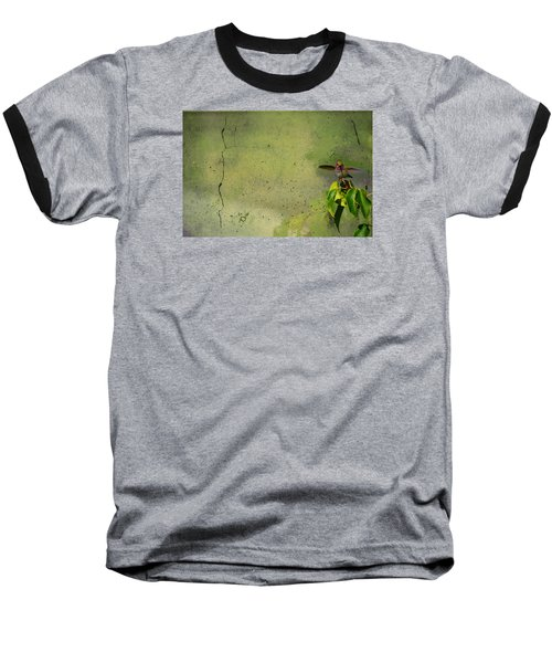 Plate 087 - Hummingbird Grunge Series Baseball T-Shirt