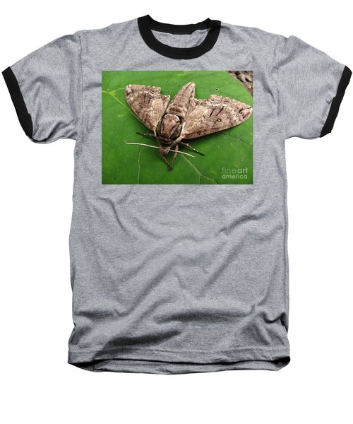 Plebeian Sphinx Moth Baseball T-Shirt