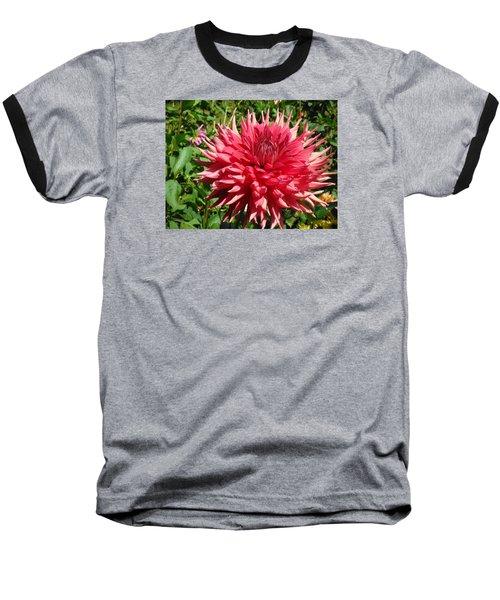 Pointed Pink Dahlia  Baseball T-Shirt