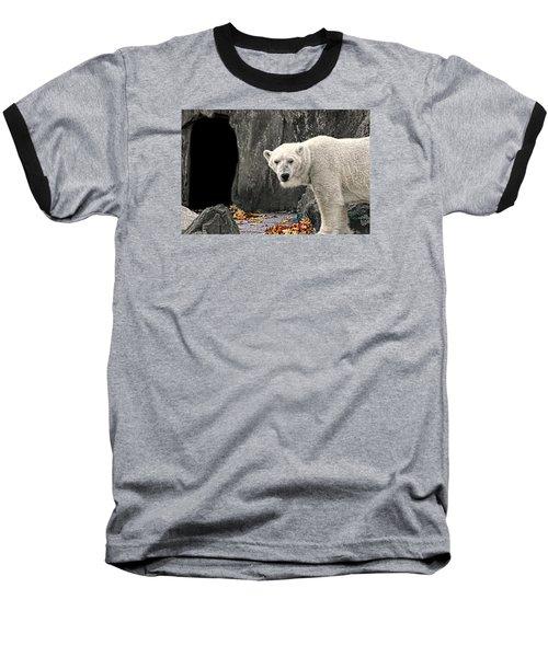 Polar Bear 101 Baseball T-Shirt by Diana Angstadt