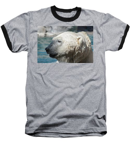 Polar Bear Club Baseball T-Shirt
