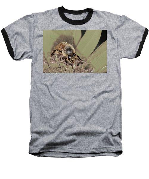 Pollinating Bee Baseball T-Shirt