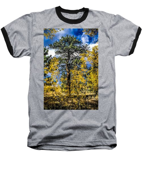 Ponderosa  Tree In The Aspens Of Fall Colorado Baseball T-Shirt