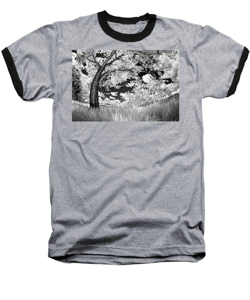 Poplar On The Edge Of A Field Baseball T-Shirt by Dan Jurak