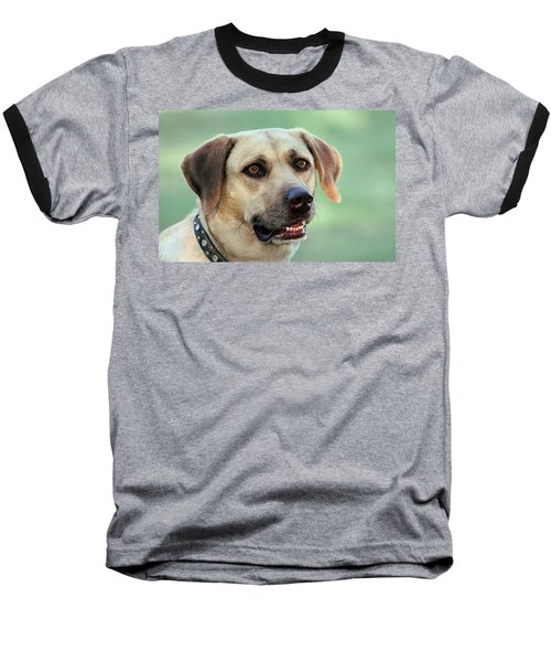 Portrait Of A Yellow Labrador Retriever Baseball T-Shirt by Sheila Brown