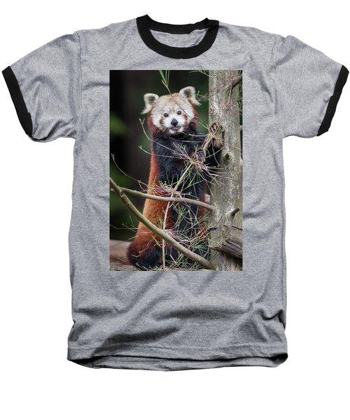 Portrat Of A Content Red Panda Baseball T-Shirt by Greg Nyquist