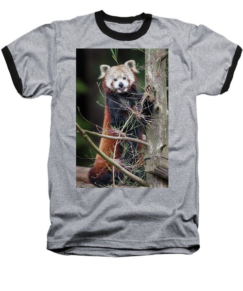 Portrat Of A Content Red Panda Baseball T-Shirt