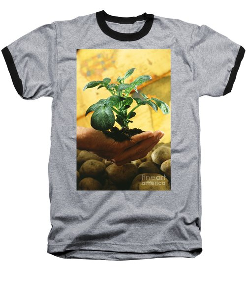Potato Plant Baseball T-Shirt by Science Source