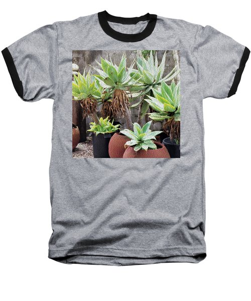Potted Agave Plants Baseball T-Shirt