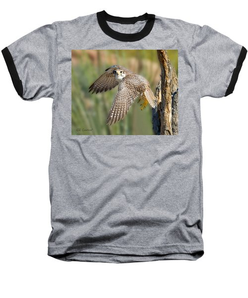 Prairie Falcon Taking Flight Baseball T-Shirt