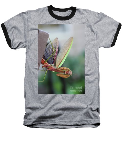 Praying Mantis Baseball T-Shirt by Stacey Zimmerman