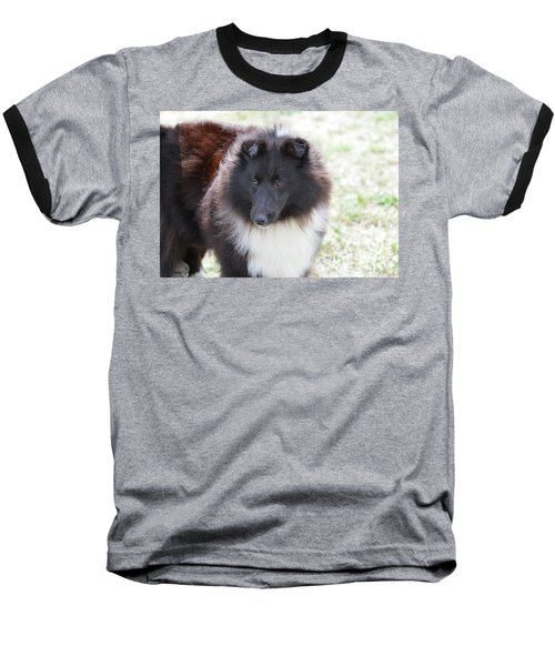 Pretty Black And White Sheltie Dog Baseball T-Shirt by DejaVu Designs