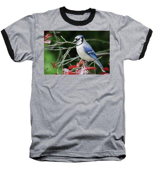 Pretty Blue Jay Baseball T-Shirt by Trina Ansel