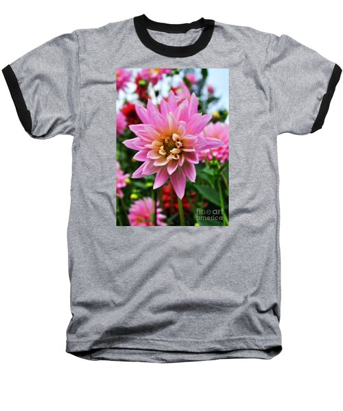Pretty Pink Dahlia  Baseball T-Shirt