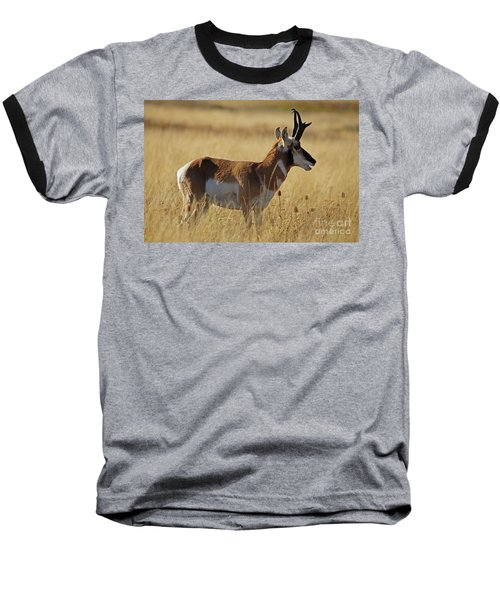 Pronghorn Antelope Baseball T-Shirt by Cindy Murphy - NightVisions