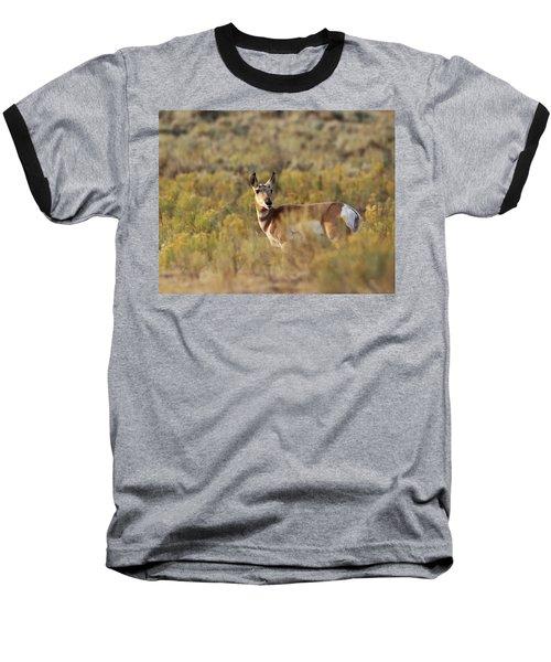 Pronghorn Doe Baseball T-Shirt