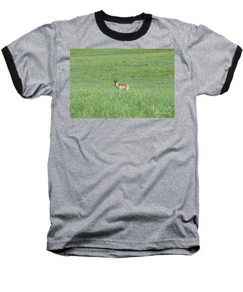 Pronghorn In A Sea Of Green Baseball T-Shirt