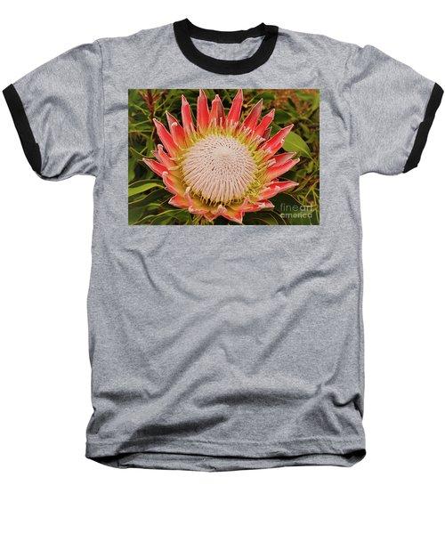 Protea I Baseball T-Shirt by Cassandra Buckley