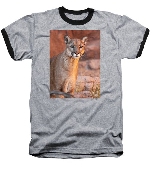 Puma At Sunset Baseball T-Shirt by Max Allen