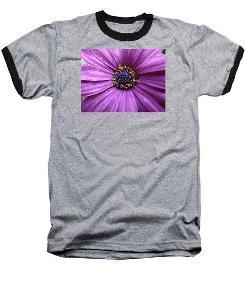 Purple African Daisy Baseball T-Shirt