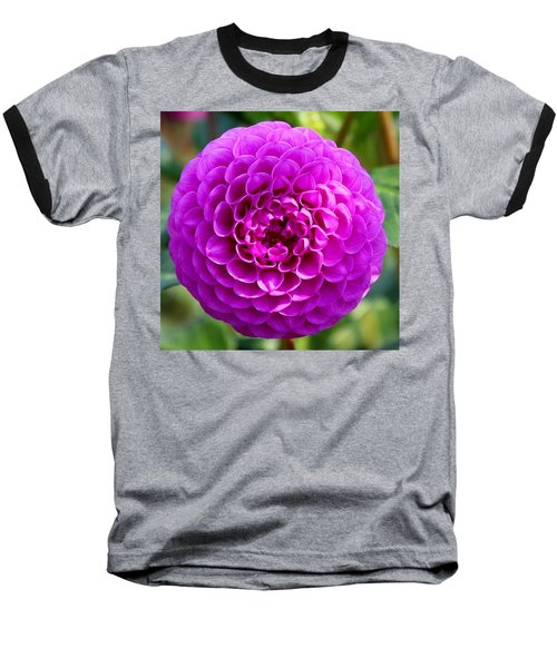 Purple Dahlia Baseball T-Shirt