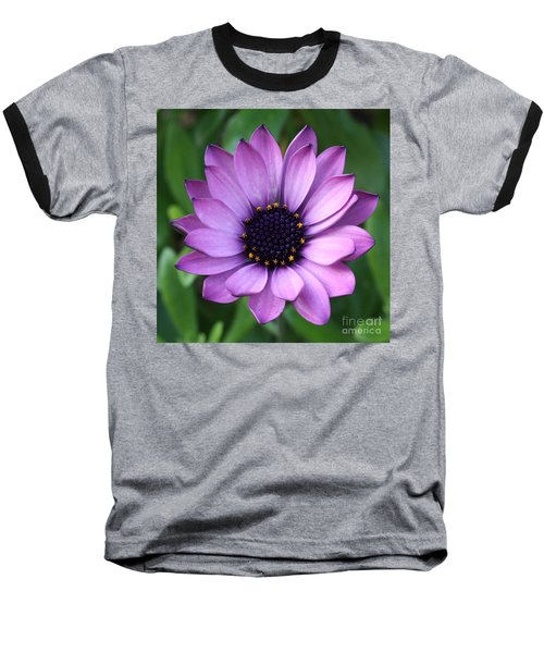 Purple Daisy Square Baseball T-Shirt