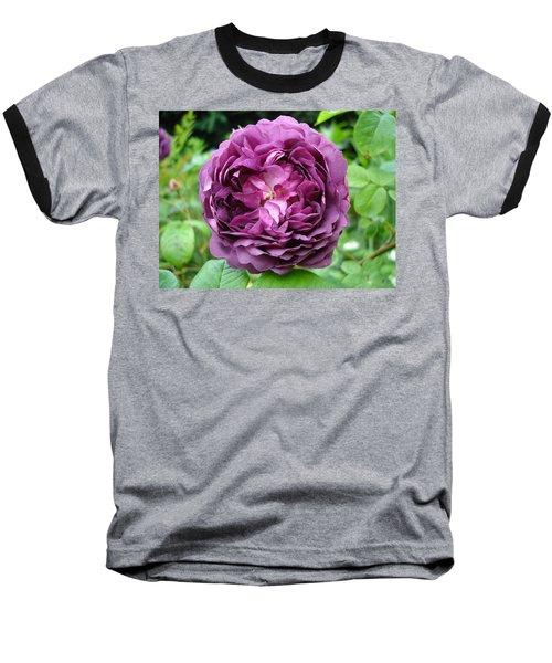 Purple English Rose Baseball T-Shirt